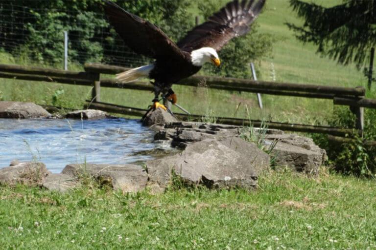 naturwildpark-freisen_falnerei-002