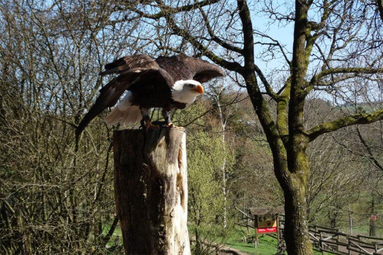 naturwildpark-freisen_falnerei-004